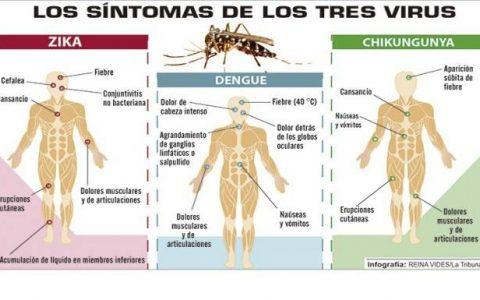 Los síntomas de los virus